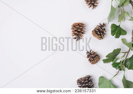 Pine Cones With Branches White Space Horizontal Top View