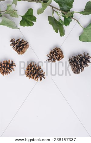 Pine Cones With Branches White Space Flat Lay Top View