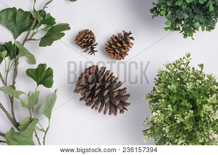 Large Pine Cones With Foliage Flat Lay Top View