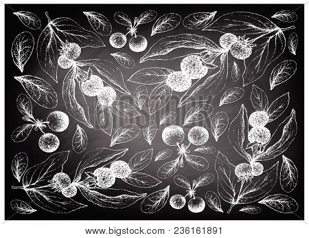 Berry Fruits, Illustration Wall-paper Background Of Hand Drawn Sketch Fresh Ceylon Gooseberries And