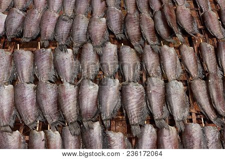 Single Sunshine Dried Fish Made From Trichogaster Pectoralis Fish, Put Orderly In Sunlight On Bamboo