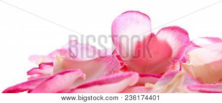 Pink Rose Petals And Heart Shaped Blossom Petal.valentines Day Background.