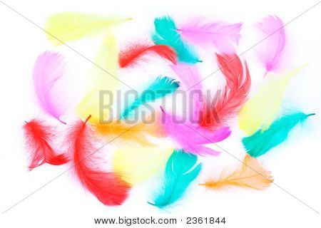 Colored Feathers On White