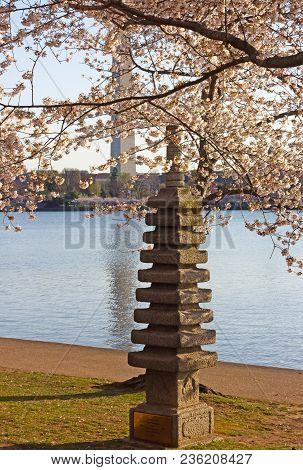 The Japanese Stone Pagoda And Washington Monument During Cherry Blossom In Washington Dc. Washington