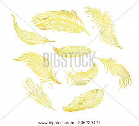 Collection Of Hand Drawn Feather. Isolated On White Background. Set Of Decorative Animals Birds Feat