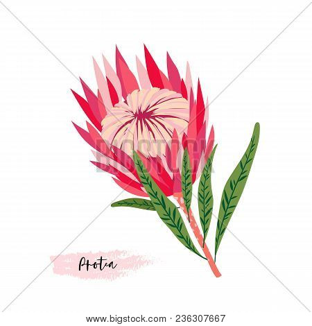 Set Of Protea Flowers. Vector Digital Modern Art. Bright Pink, Red, Rose Ang Green Colors. Bloosoms