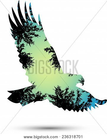 Silhouette Of Eagle With Coniferous Trees On The Background Of Blue Sky.   Flying Eagles. View From