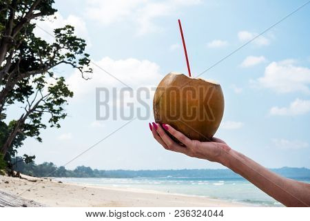 Coconut Drink In Hand. Hand Of Black Woman Holding Coconut With Drinking Straw At Caribbean Coast Fr