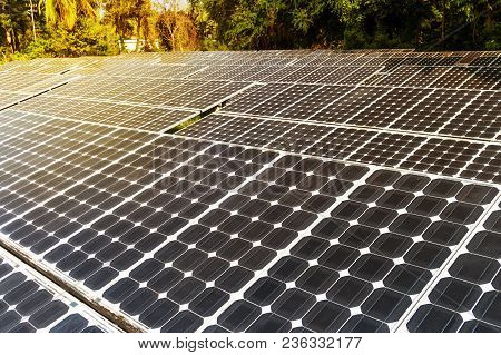 Sunset Under The Solar Photovoltaic. Sunlight On The Solar Battery Black In The Jungle
