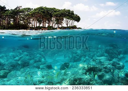 Above And Below Sea Surface Near Tropical Island Beach With Palometa Fish Underwater Swimming Over S