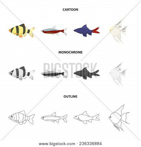 Angelfish, Common, Barbus, Neon.fish Set Collection Icons In Cartoon, Outline, Monochrome Style Vect