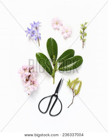Spring Botanical Floral Composition. Pink Japanese Cherry Blossoms, Blue Scilla Flowers And Evergree
