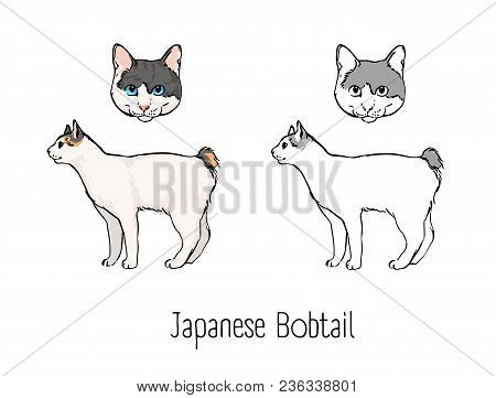 Bundle Of Colorful And Monochrome Outline Drawings Of Head And Body Of Japanese Bobtail Cat Isolated