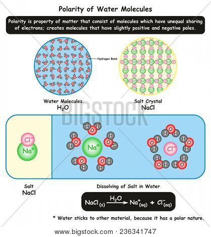 Polarity of Water Molecules infographic diagram showing its microscopic view along with crystal structure of salt and how it dissolve in water for chemistry science education