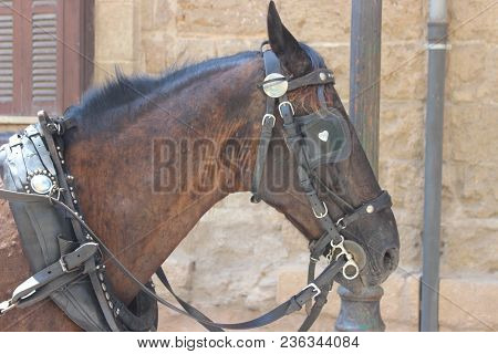 Brown Horse Wears Halter Awating His Owner With His Blinkers