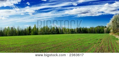 Plowed Field Of Crops With Young Sprouts