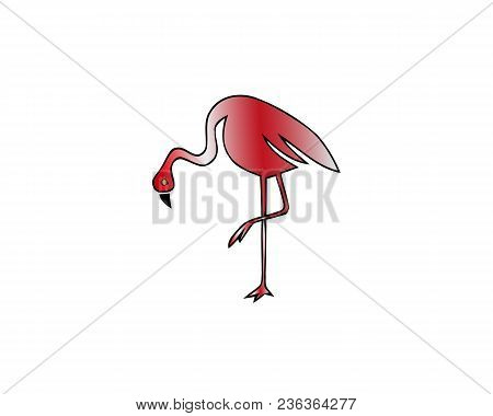 Red Flamingo Vector Illustration Isolated On White. Wading Bird. Greater Flamingo. Lesser Flamingo.