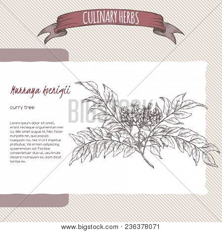 Branch Of Curry Tree Aka Murraya Koenigii Hand Drawn Sketch. Culinary Herbs Collection. Great For Co