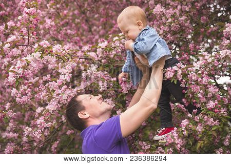 Happy Family. Father Throws Up Child In The Blooming Apple Trees, On Sunny Day In The Park. Positive
