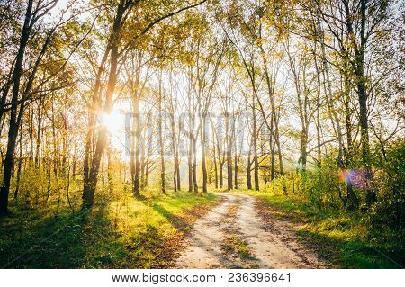 Sun Shining Through Forest Woods Over Lane, Country Road. Path, Walkway Through Deciduous Forest. Su