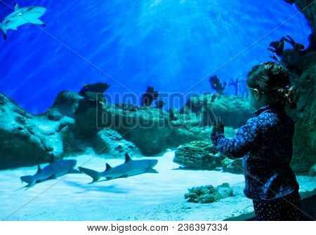 Little Girl Looks At Sharks In Beautiful Blue Aquarium. The Child Watches A Fish In Aquarium. People