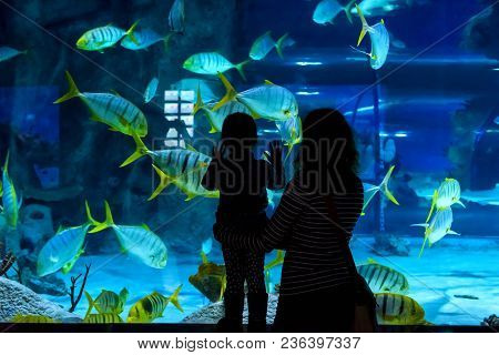 Moscow - April 2, 2018: Young Woman With Child Watch A Fish In Aquarium. Silhouettes Of People Visit