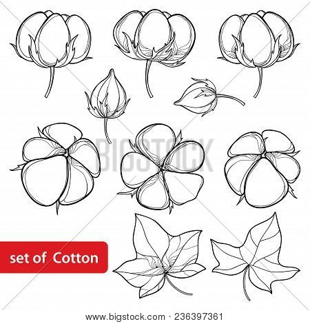 Vector Set With Outline Cotton Boll And Leaf In Black Isolated On White Background. Ornate Agricultu