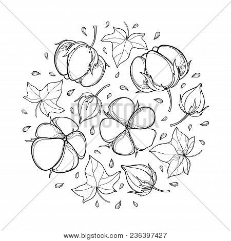 Vector Round Composition With Outline Cotton Boll, Leaf And Capsule In Black Isolated On White Backg
