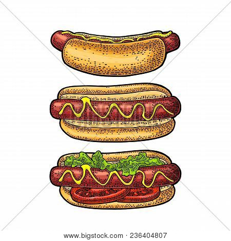 Hotdog With Tomato, Mustard, Leave Lettuce. Top And Side View. Vector Color Vintage Engraving Illust