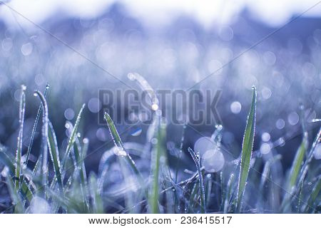 Dew On The Grass. Morning Grass. Bokeh On The Grass. Blue Nature Background. Spring Background. Rain