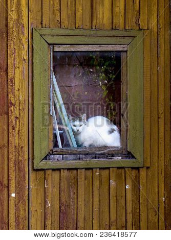 Sad Lonely Cat Looking Trough The Window