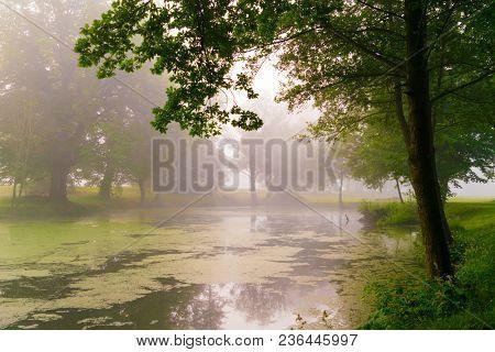 Swamp in fog