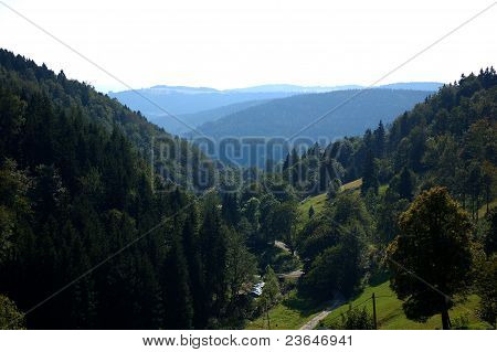 Summer in the Owl Mountains