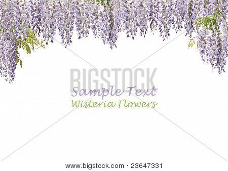 Wisteria Flower Curtains