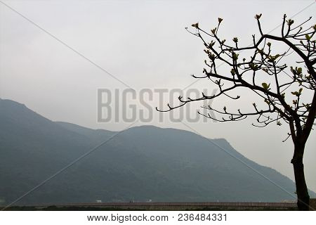 The Calm Quiet Of A Stencilled Tree Budding In The Foreground Of A Misty Mountain Background