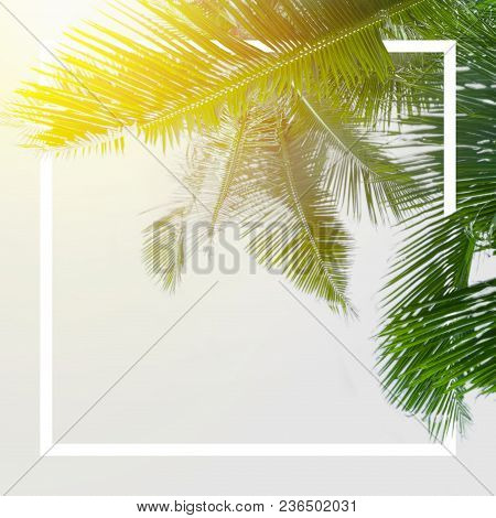 Green Palm Leaves Is Over White Background
