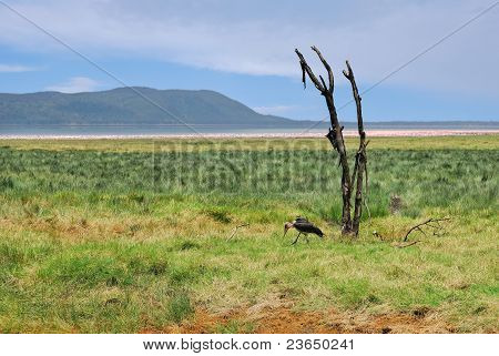 Dry Plant And Marabou Stork, Nakuru Lake