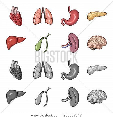 Liver, Gallbladder, Kidney, Brain. Human Organs Set Collection Icons In Cartoon, Monochrome Style Ve