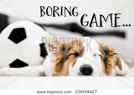 Puppy Dog Sleeping On The Couch, Football In The Background, English Text Boring Game