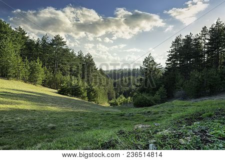 Forest In A Green Valley. Pine Forest In A Green Valley. Sun Rays On A Forest Trees. Valley In A Bea