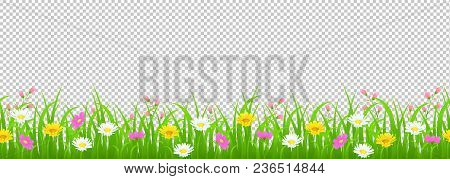 Flowers And Grass Border, Yellow And White Chamomile And Delicate Pink Meadow Flowers And Green Gras