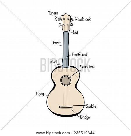 Music Instrument Infographic With Hand Drawn Ukulele.