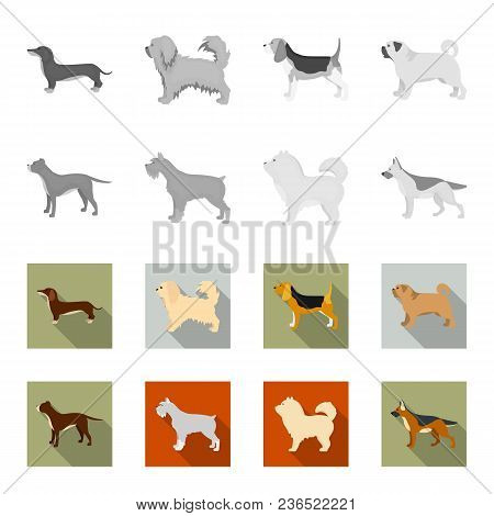 Pit Bull, German Shepherd, Chow Chow, Schnauzer. Dog Breeds Set Collection Icons In Monochrome, Flat