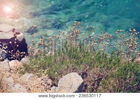 Beautiful Grass On The Background Of Azure Sea