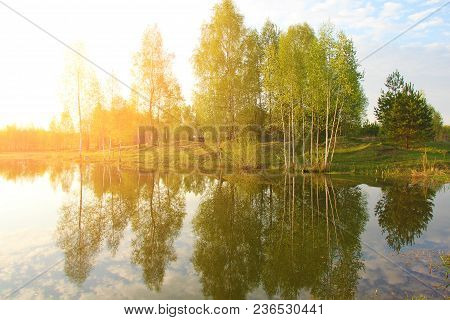 Dawn On The Lake. A Beautiful Summer Landscape And Birches At Dawn.