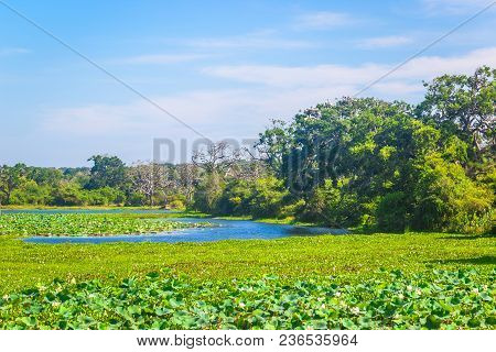 Yala National Park, Sri Lanka, Asia. Beautiful Road, Lake And Old Trees. Forest In Sri Lanka, Big St