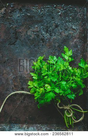 Green Parsley On Dark Background