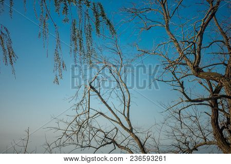 Blue Spring Sky And Its Background Branches Of Different Trees In The Southern City