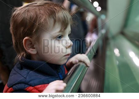 Curious Kid In Zoo