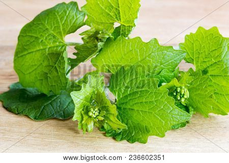 Young Garlic Mustard Twigs On A Wooden Background